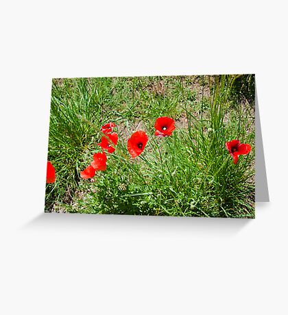 Poppies on the Dorset Coast  Greeting Card