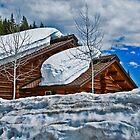 Springtime in the Rockies by Bryan D. Spellman