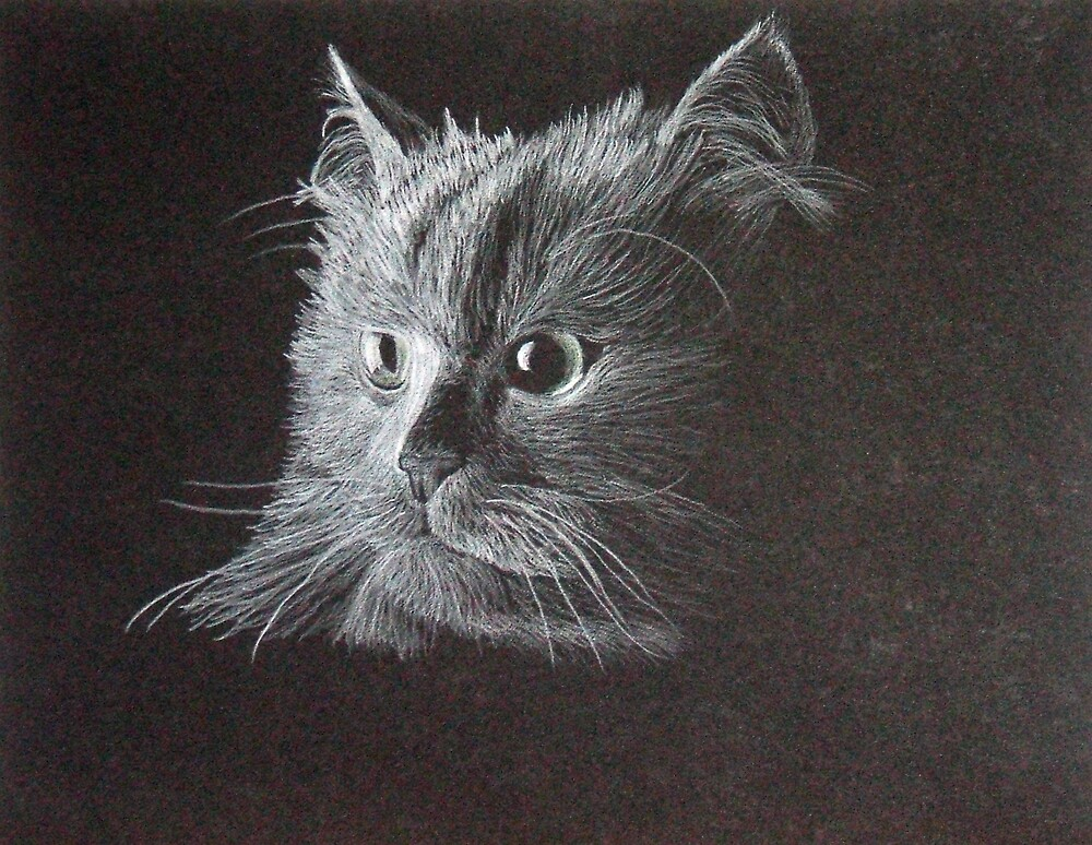 Cat on Black by BrandyHouse