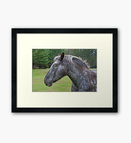 Other Horse Framed Print