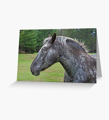 Other Horse Greeting Card