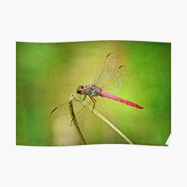 Dance of the Dragonfly Poster