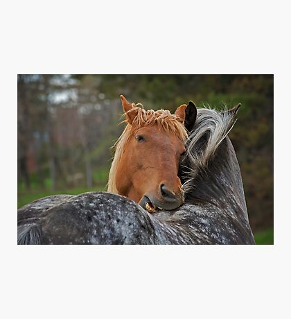 Horse Hug Photographic Print