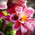 Flowers really do intoxicate me. by Sunil Bhardwaj