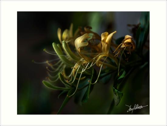 Honeysuckles 14 by Patito49
