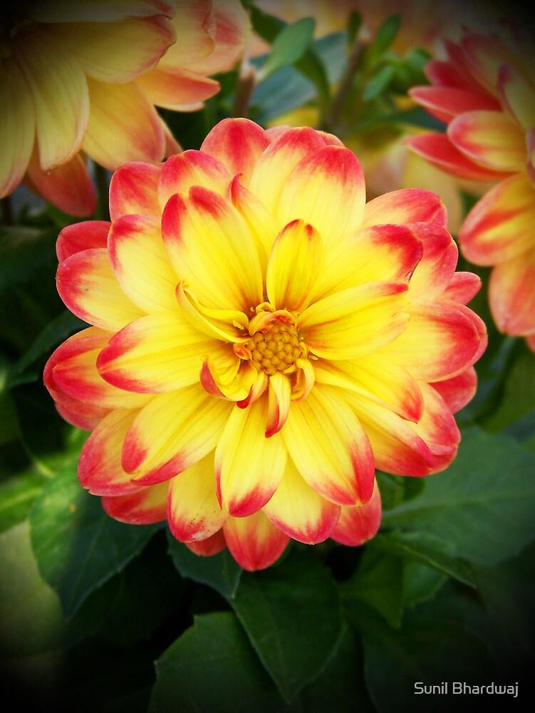 Earth laughs in flowers. by Sunil Bhardwaj