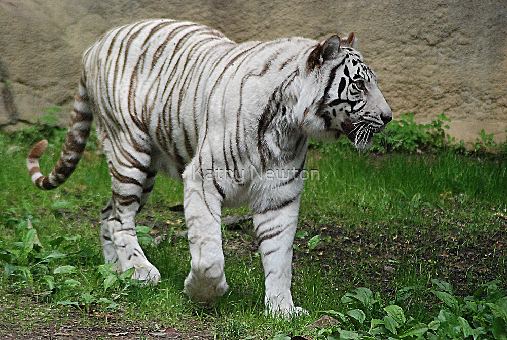 Something is Going On - Cincinnati Zoo by Kathy Newton