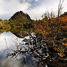 Twisted Fagus on Twisted Lakes by Robert Mullner