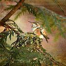 Baby-Kolibri auf Kolibri-Nest von Peggy Collins