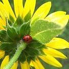 Sunflower Lady by Alissa Slagle
