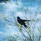 Bird Song by John Rivera