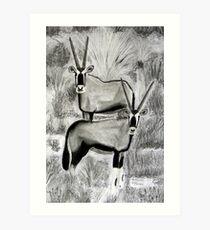 Antelope: Gemsbuck  (Oryx gazella) Art Print