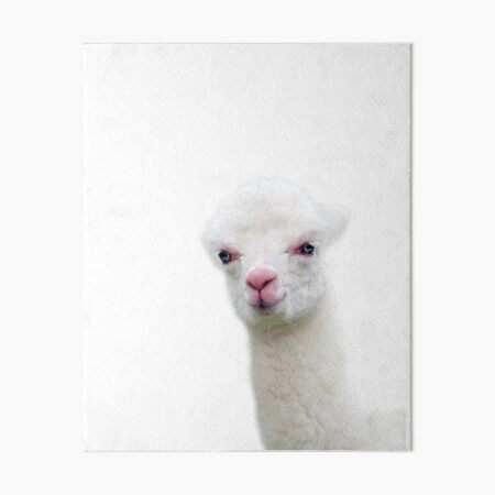 White Baby Alpaca, Llama, Cria Art Board Print