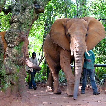 A Walk With The Elephants by susanbergstrom