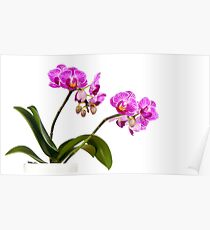 Tropical Blooms Poster