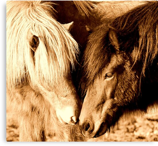 Horse whisperers by Alan Mattison