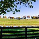 Kentucky Horse Farm by Mary Carol Story
