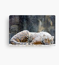 Warm Coat Metal Print