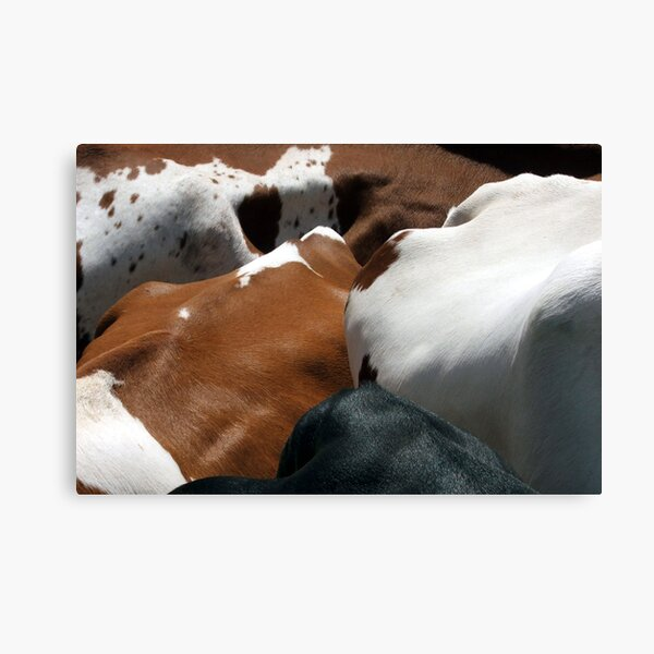 Cows Of All Colors Canvas Print