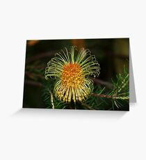 Banksia laricina  Greeting Card