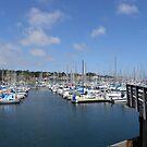 Monterey Bay Fisherman's Wharf Harbor by Sandra Gray