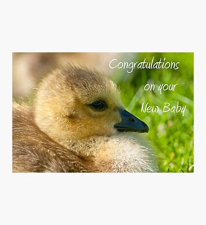 Goose Baby Card Photographic Print