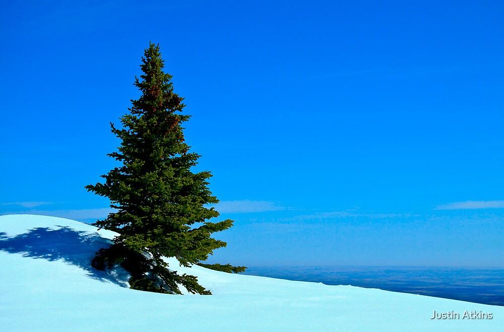 Lone Alpine Tree By Justin Atkins Redbubble