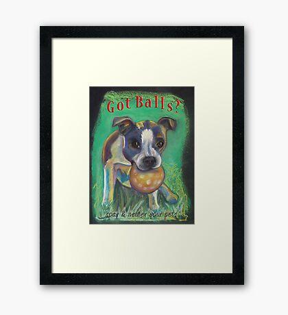 Boston Terrier - Spay/Neuter Framed Print