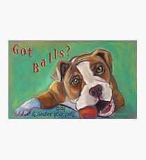 Bulldog - Spay/Neuter Photographic Print