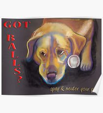 Golden Lab - Spay/Neuter Poster