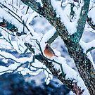 Female Cardinal In Snowy Tree by Mary Carol Story