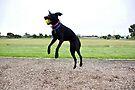 Air born dog by Leigh Monk