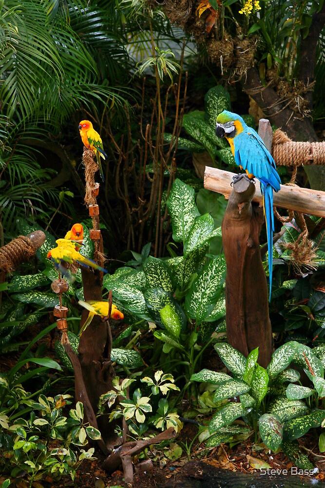 Birds at Jurong Bird Park Singapore by Steve Bass
