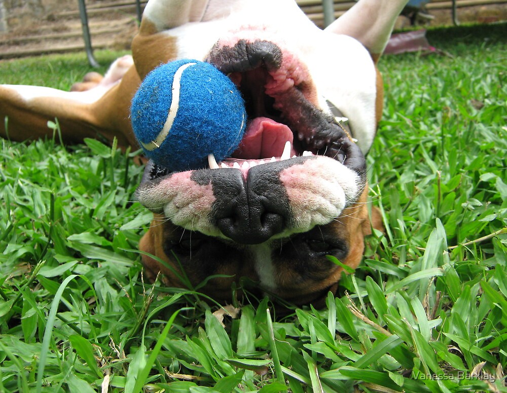 Just Me & My Ball by Vanessa Barklay