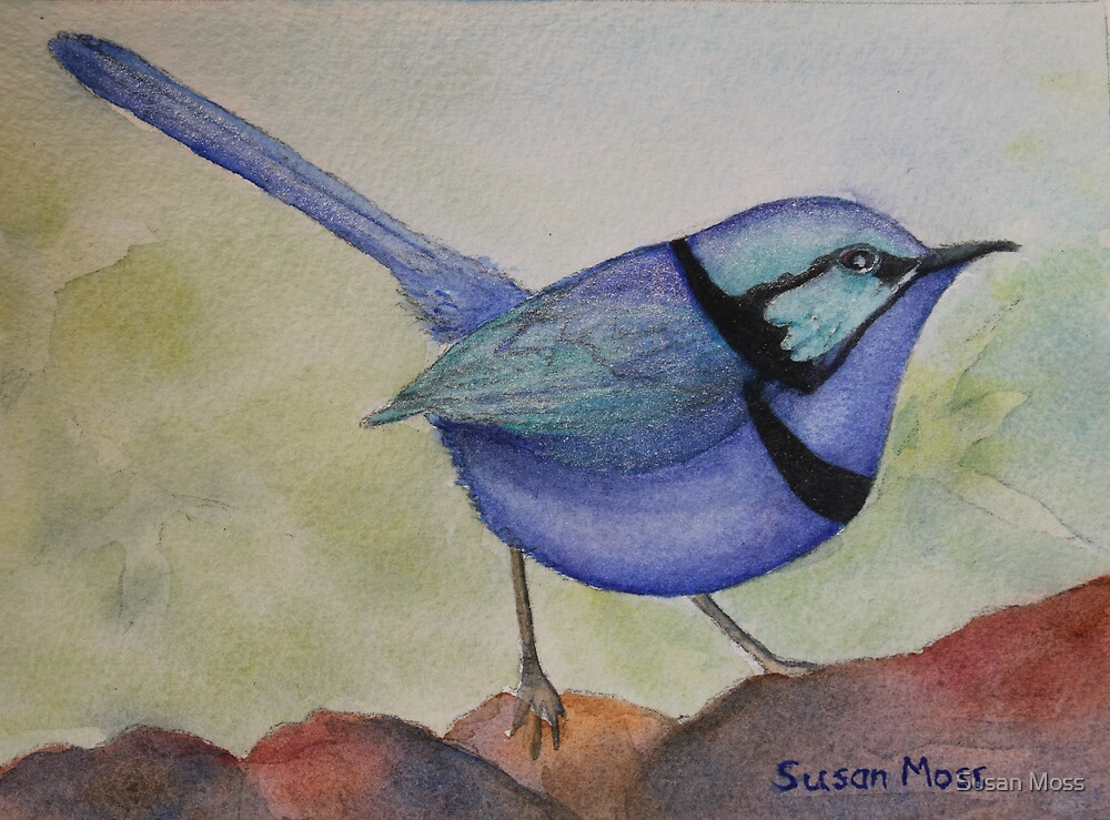 Splendid Blue Wren by Susan Moss