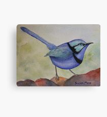 Splendid Blue Wren Canvas Print