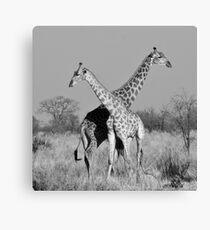 Giraffe Pair, Okavango Delta, Botswana Canvas Print
