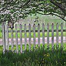 Country fence by Sandra Guzman
