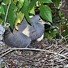 Tri-Colored Heron with Chick by Jeff Ore