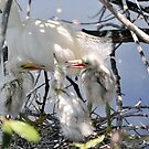 Snowy Egret with Chicks by Jeff Ore