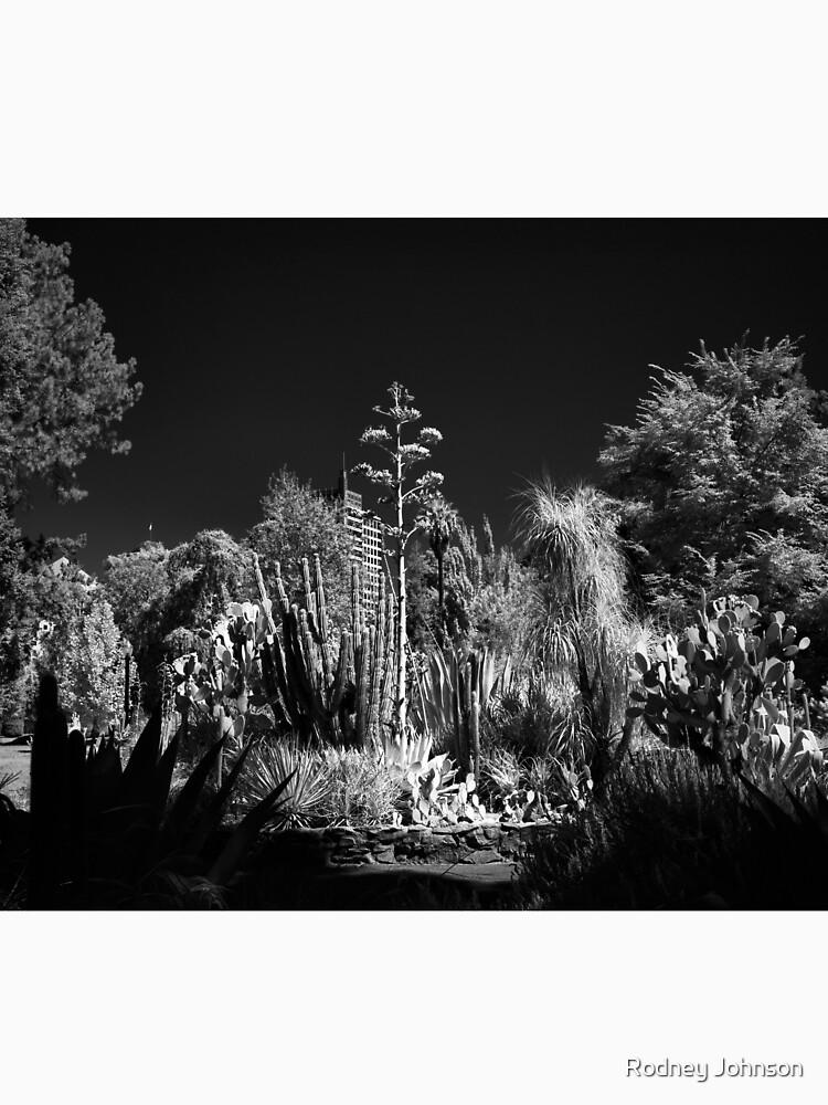 Cactus Garden, Capitol Park, Sacramento California by rodneyj46