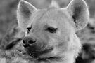 Hyena Profile by Michael  Moss