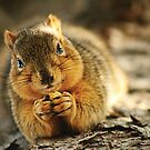 Leave My Nut Alone! by Stepan Lorenc
