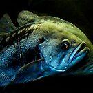 Rockfish by mogue