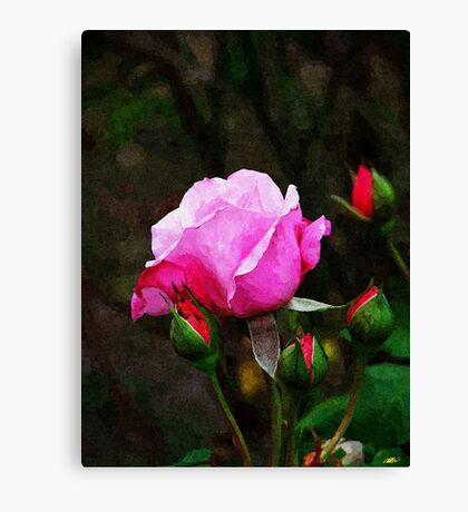 Pink Rose Oil Painting Canvas Print