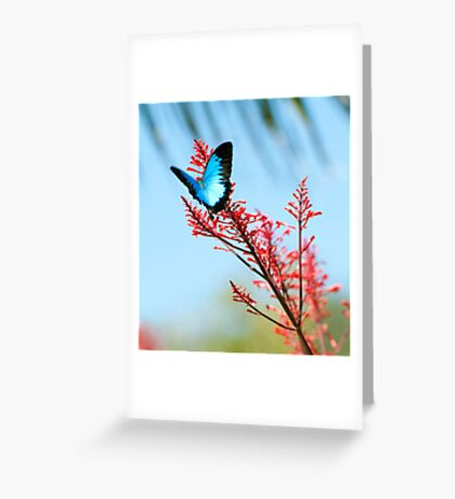 The beautiful Ulysses butterfly Greeting Card