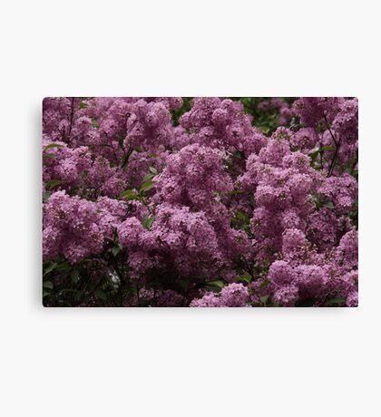 Lilac Supreme Canvas Print