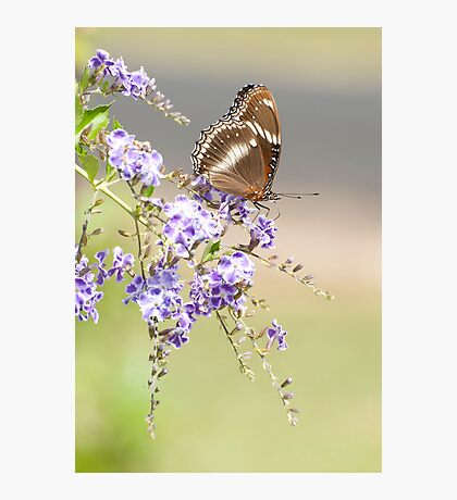 Geisha girl - butterfly feeding. Photographic Print