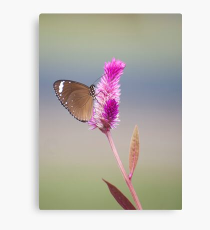 Happy Days - common eggfly butterfly Canvas Print