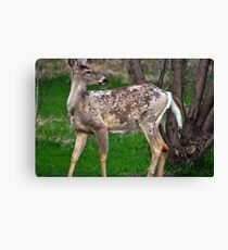 Mother Deer Canvas Print